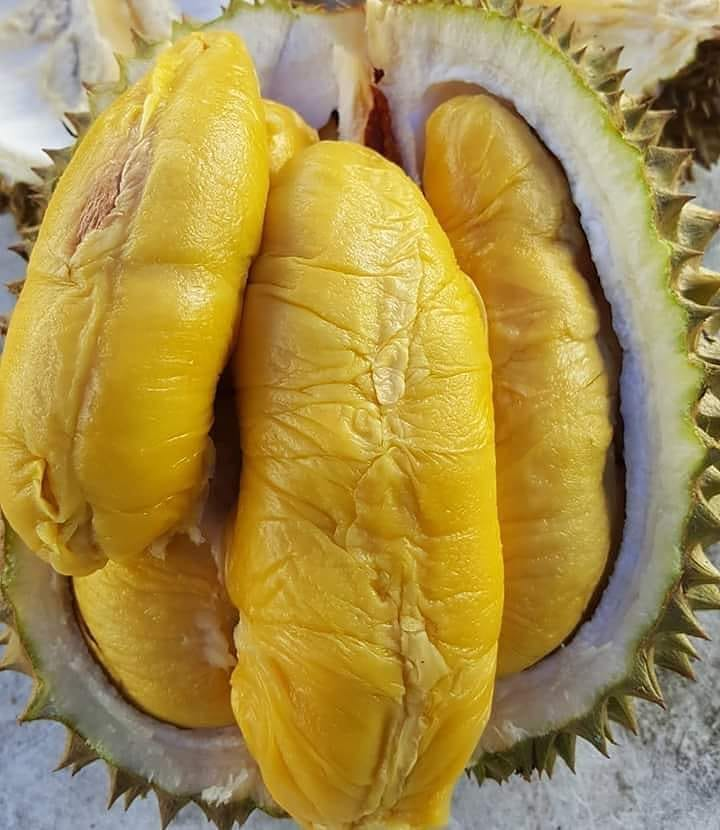 Durian — Musang King