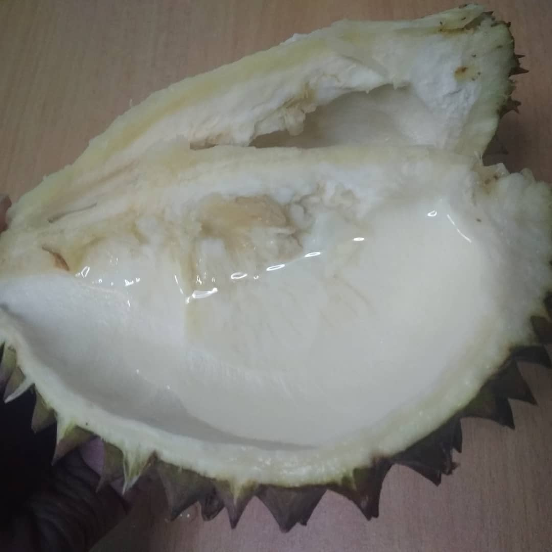 Durian husk containing water