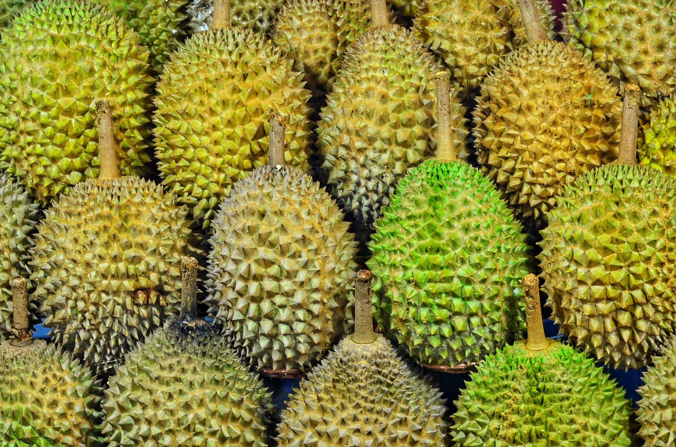 Durian Guide